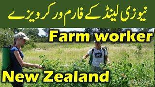 Download Work in New Zealand : New Zealand Farm Worker Visa. Video