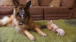 Download Five Cutest Animal Friendships | Too Cute! Video