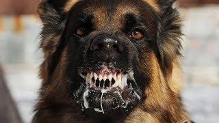 Download 30 Surprising Origins Of Common Animal Phrases Video