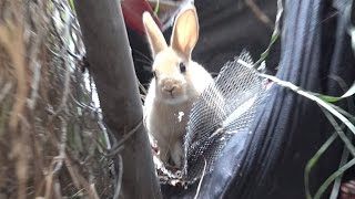 Download Hope For Paws rescuing a cute little bunny!! Please share so we can find her a home. Video