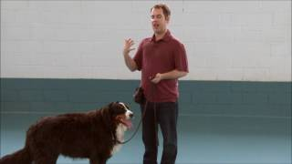 Download Teach your dog to Walk on a Loose Leash with Tristan Flynn Video
