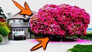Download Los arboles más bellos y hermosos del mundo Video