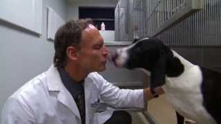Download Animal Research Laboratory Video