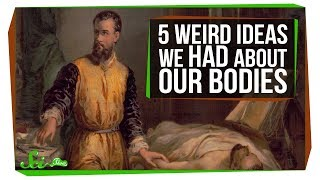 Download 5 Things Humans Got Really Wrong About Our Bodies Video