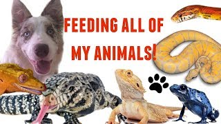 Download FEEDING ALL OF MY ANIMALS! Video
