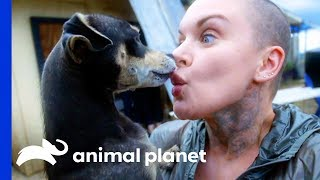 Download 5 Lucky Puerto Rican Dogs Head Home With Amanda   Amanda To The Rescue Video
