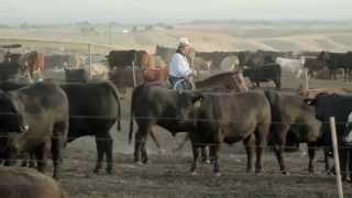 Download Agri Beef Co. Ranch to Table Video