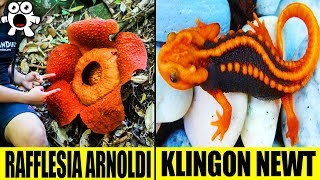 Download Top 10 Most Extraordinary Jungle Discoveries Video
