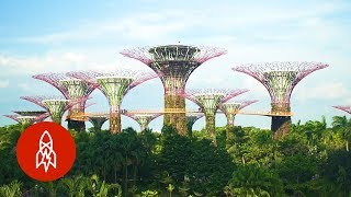 Download Visit Singapore's Stunning Grove of Man-Made Trees Video