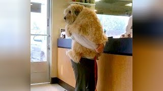 Download ANIMALS GO TO THE VET: Funniest REACTIONS - You'll LAUGH ALL DAY LONG Video