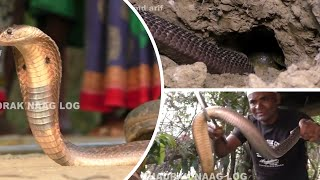 Download Monocled Cobra & Rat Snake Rescue In Jalanga, Kaupur, Geltua, Bhadrak, Odisha Video