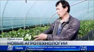 Download Как увеличить урожайность традиционных сельскохозяйственных культур в Казахстане Video