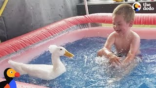 Download Boy And His Duck Best Friends Have So Much Fun Together | The Dodo Video