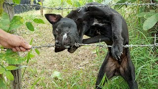 Download Wow!!! The dog trapped with barbed wire, How can we help it? | Life of Natural Foods Video