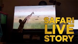 Download safariLIVE Story: Your Pets React to safariLIVE! Video