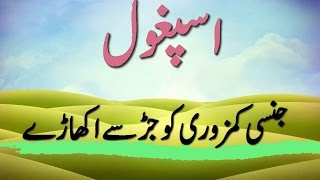 Download اسپغول کے فواید Video