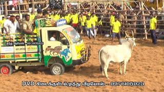 Download வீரார்களை தெறிக்கவிடும் கட்டுக்காடங்த ஜல்லிக்கட்டு காளை Video