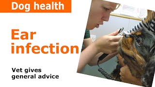 Download Dog Ear Infections - Vet Advice Video