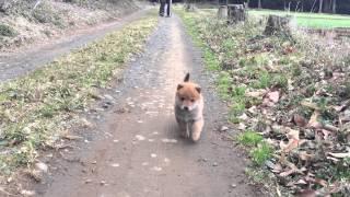 Download 捨て犬 ちゃろみ(仮名)♀ Video