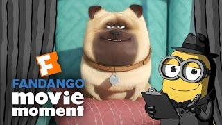 Download Minions At the Movies React to The Secret Life of Pets - Fandango Movie Moment (2016) Video