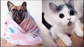 Download Cute baby Animals Videos Compilation 2019 Video