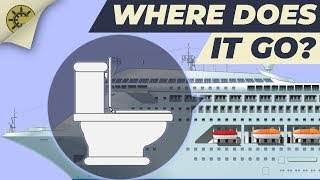 Download What happens after you flush the toilet on a cruise ship? Video