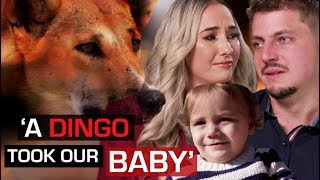 Download Wild dingo steals baby while parents sleep | 60 Minutes Australia Video