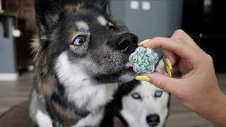 Download 3 DIY Hacks To Clean Your Dogs Teeth! Video