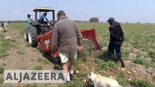 Download White farmers thrive in Zambia years after driven from Zimbabwe Video