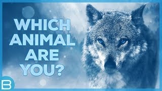 Download Which Animal Are You? Video