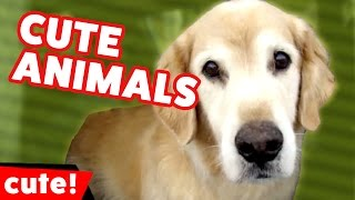 Download Funniest Cute Pet & Animal Reactions, Bloopers & Moments of 2016 Weekly Compilation | Kyoot Animals Video