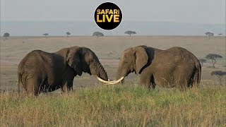 Download safariLIVE - Sunrise Safari - July 15, 2019 Part 2 Video