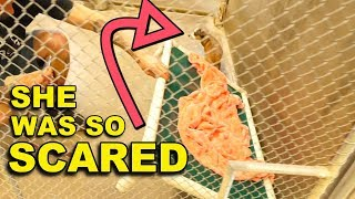 Download Rescue Dog BLOSSOM Terrified Until Hiding Spot Transformed | Featured on The Dodo Video