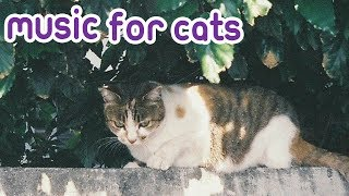 Download Music for kittens, Relax your new born cat with Soothing relaxing music! Video
