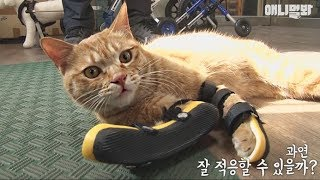 Download 다리 꺾인 길냥이 '지나'의 묘생역전?! Video