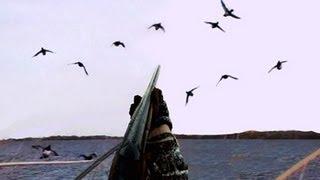 Download Duck Hunting: Diver Ducks Video