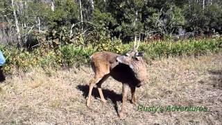 Download Old Deer, Ready to Die Video