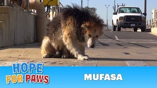 Download Rescuing a homeless senior dog from a water treatment facility. Please share. Video
