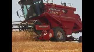 Download inizio campagna trebbiatura 2015 azienda agricola fll Parisi Garaguso (MT) Video