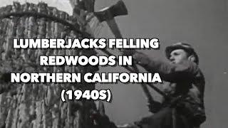 Download 1940s Lumberjacks felling Redwoods in Northern California Video
