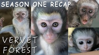 Download Amazing Baby Orphan Monkey Rescues - The Vervet Forest - Season 1 Recap Video