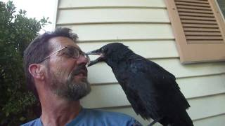Download Raven Breath Video