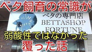 Download 【アクアリウム】日本屈指のベタ専門店フォーチュンPart2 Video