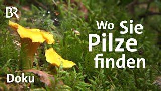 Download Pilze finden leicht gemacht: Tipps Schwammerl-Experten | Zwischen Spessart und Karwendel Video