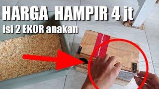 Download TABUNGAN MENIPIS | 4JT CUMA BUAT BELI ANAKAN BURUNG 🔥 Video