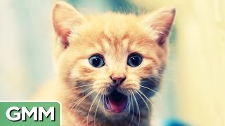Download Learn to Speak Cat Video
