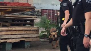 Download Tank is on the prowl in Colorado Springs Video