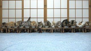 Download 食事中にびっくりして逃げる猫たち Video