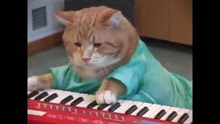 Download Keyboard Cat REINCARNATED! Video