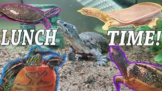 Download Feed My Pet Friday: Softshell, Painted, Map, and Musk Turtles! Video